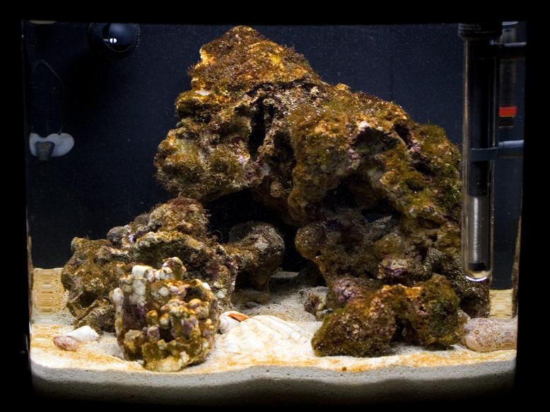 Diatoms Algae | Scubs' Adventures